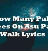 How Many Palm Trees On Asu Palm Walk Lyrics